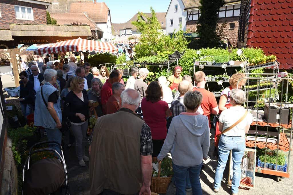 Bio-Kräuter- und Pflanzenmarkt in Bevern
