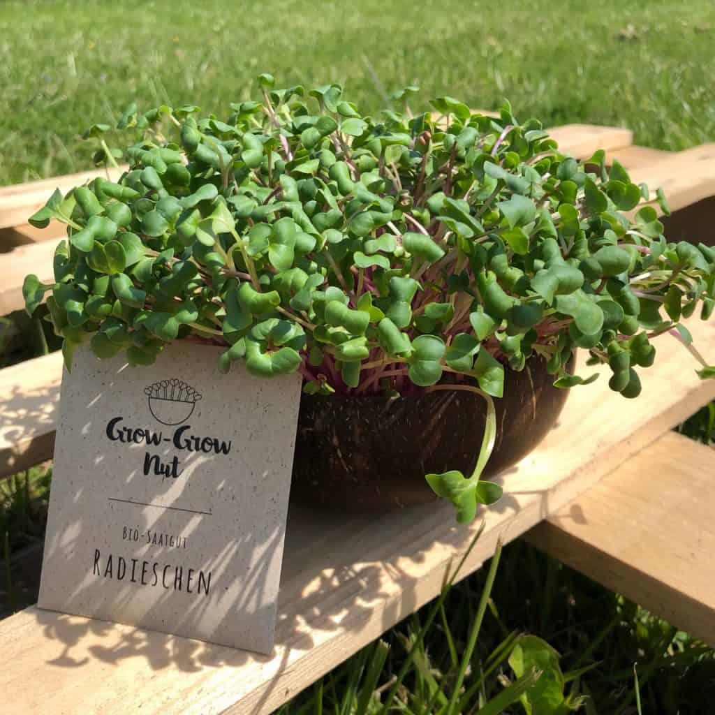 Mit Grow Grow Nut Bäume pflanzen